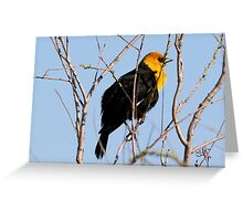 Yellow Headed Blackbird (With Video) Greeting Card