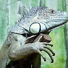 Izzy the Iguana Posing for the Camera!! by Michaela1991