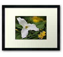 White Trillium and Yellow Anemone Framed Print