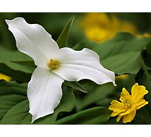 White Trillium and Yellow Anemone Photographic Print