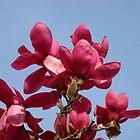 Botanical Floral art Magnolia Tree Flowering Baslee Troutman by BasleeArtPrints
