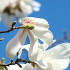 Magnolia Tree Flowers art prints Floral Baslee Troutman by BasleeArtPrints