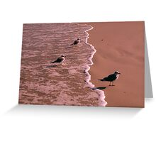 The White Line: Seabirds Greeting Card