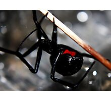 The Black Widow Photographic Print