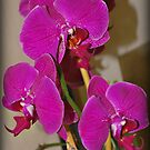 Flowers 3 by rocperk