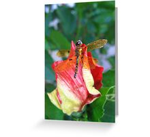Colorful nature dragon fly. Greeting Card
