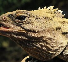 Tuatara Portrait by Veronica Schultz