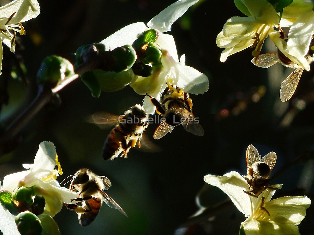 Bee-Ute-TEE-full! by Gabrielle  Lees