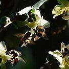 Bee-Ute-TEE-full! by Gabrielle  Lees