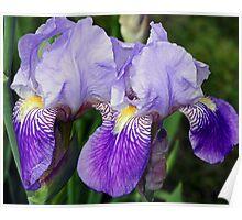 Iris Duo Poster