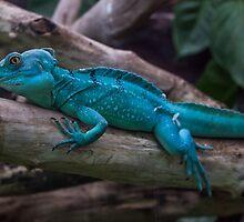 Blue dragon like lizzard by patrascano