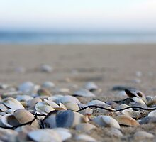 She sells seashells by Hege Nolan