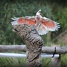 Bird Series No4 by Wzard