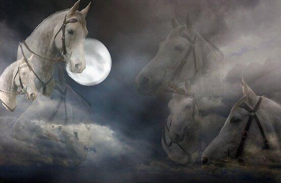 night horses by julie anne  grattan