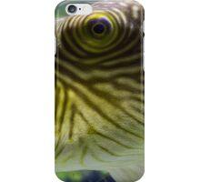 Pufferfish close up view in an aquarium iPhone Case/Skin