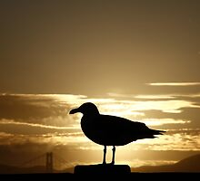 Golden Seagull Set by fototaker