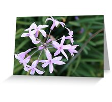 Wild Garlic - A Mauve Cluster Greeting Card