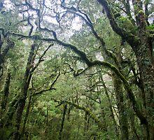 Chasm forest by benshepherd