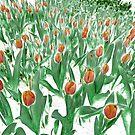 A Tulip Garden by PictureNZ