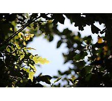 Leaf Halo Photographic Print
