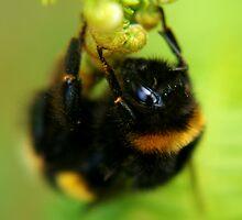 bee by tallulahminky
