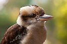 Kookaburra by Travis Easton