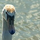 swan  by tallulahminky