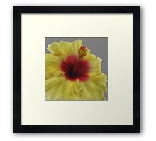 Yellow Hibiscus Flower Painting Framed Print