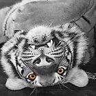 Tiger eyes by Feesbay