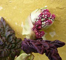 Rhubarb Flower by HeklaHekla