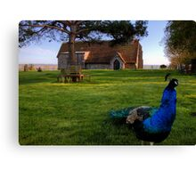 Harty Peacock Canvas Print