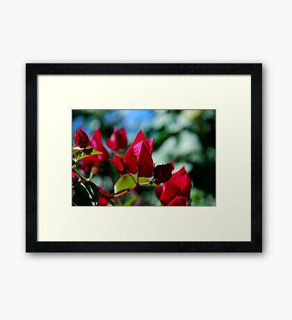 Red Spade Framed Print