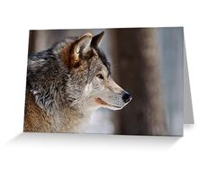 Gray Wolf (male) Canis Lupus Greeting Card