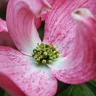 burst of pink by SKNickel