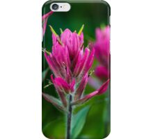 Red Indian Paintbrush iPhone Case/Skin