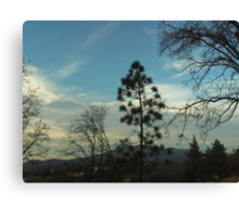 Pine Tree In Front of The Pinnacles Canvas Print