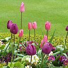 Tulips and Primroses by kathrynsgallery