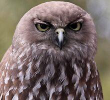 Gumpy Owl is Grumpy! by squidypoo
