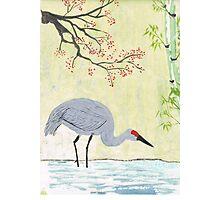 Crane in Pond Photographic Print