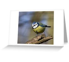 blue tit perched on a branch in the afternoon sun. Greeting Card