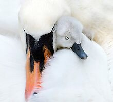 Mother's Love by Jacky Parker