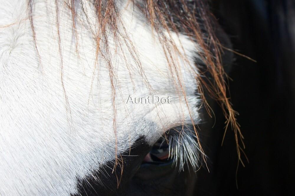 Eye of a Shire by AuntDot