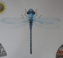 Dragon Fly 1 by Shaunacrandall