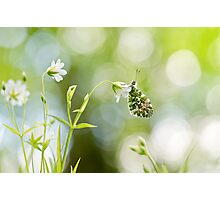 Spring Arrivals Photographic Print