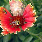 The bee's needs  by Brenda Dahl