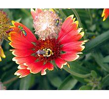The bee's needs  Photographic Print