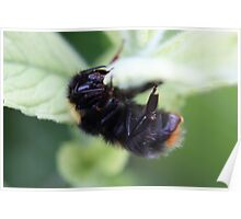 night night bumle bee Poster