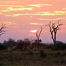 EARLY MORNING MAGIC IN KRUGER by Magriet Meintjes