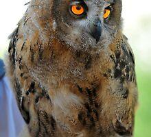 eurasian eagle owl chick by neil harrison