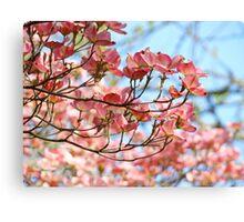 Dogwood Tree Flowering Pink Dogwood Flowers Baslee Canvas Print